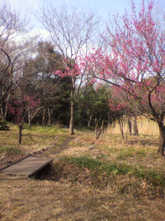 image-20120401183914.png