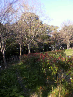 image-20120405223226.png